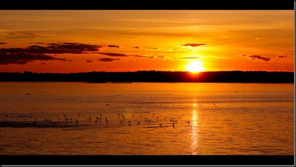 sunset_birds