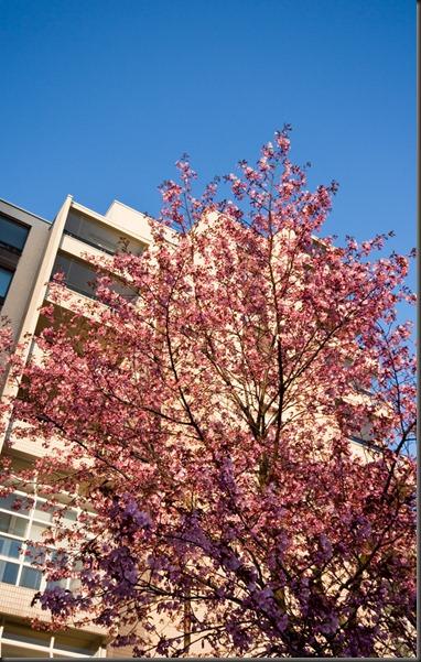 tapiola_kukkapuu