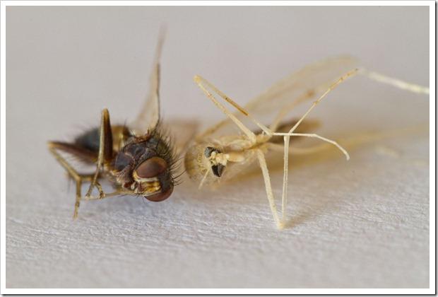 karpanen&hyttynen