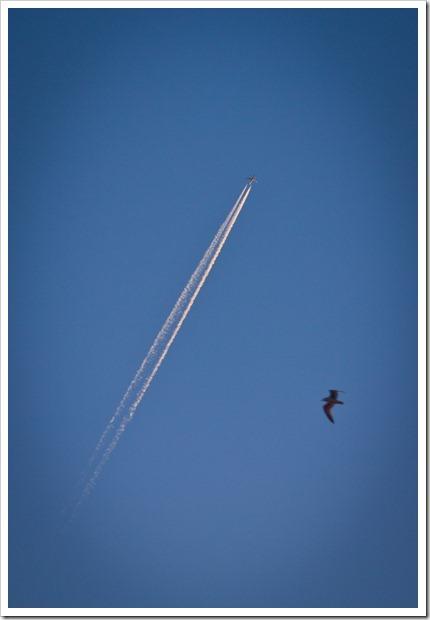 lentokonelintu