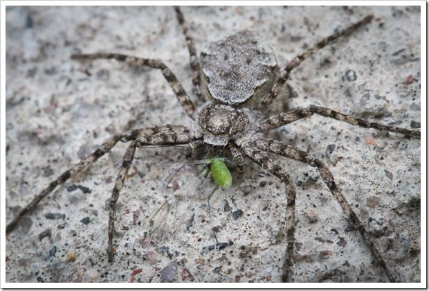 spider_closeup